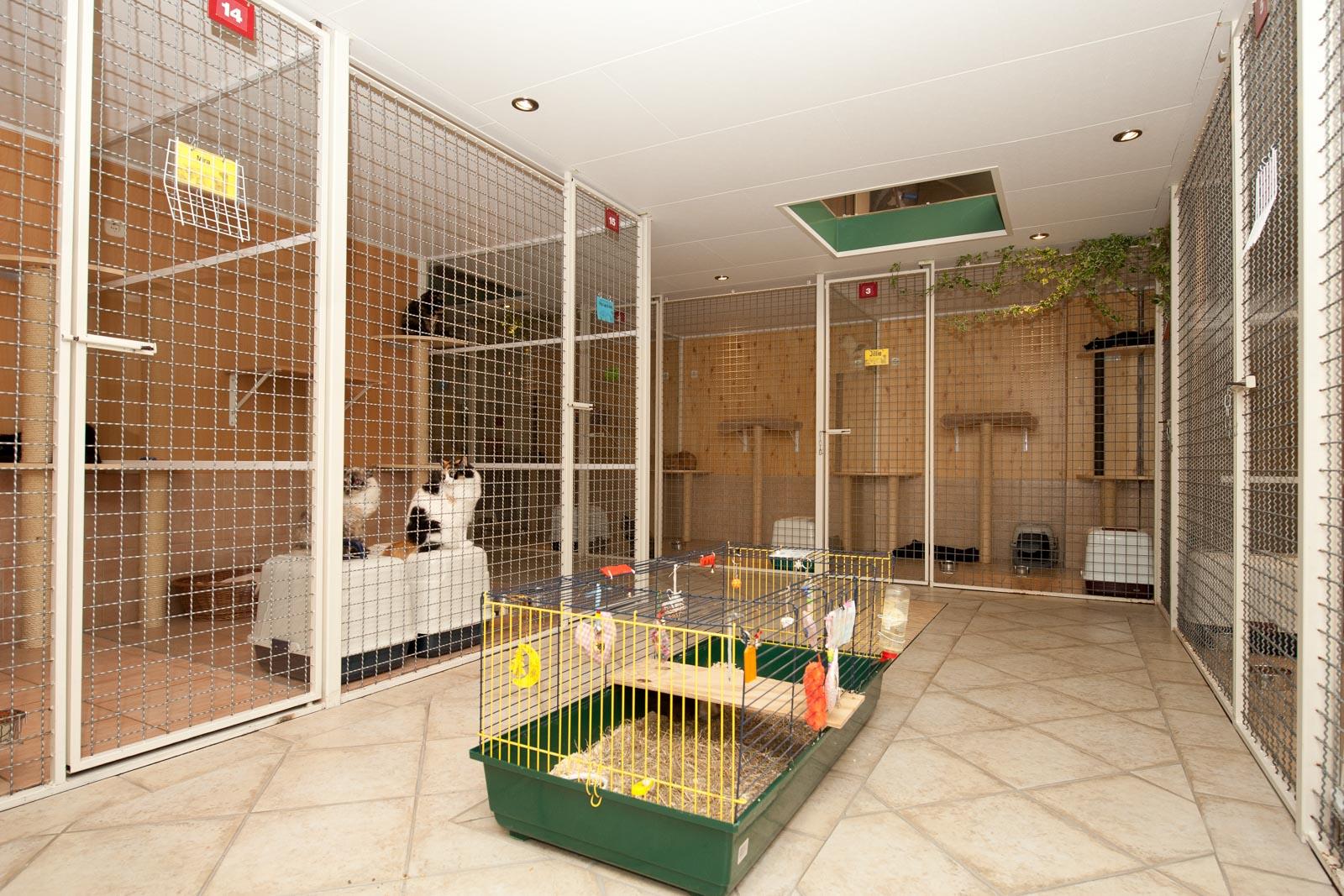 Een kooi met knaagdier in Dierenhotel Disorojo