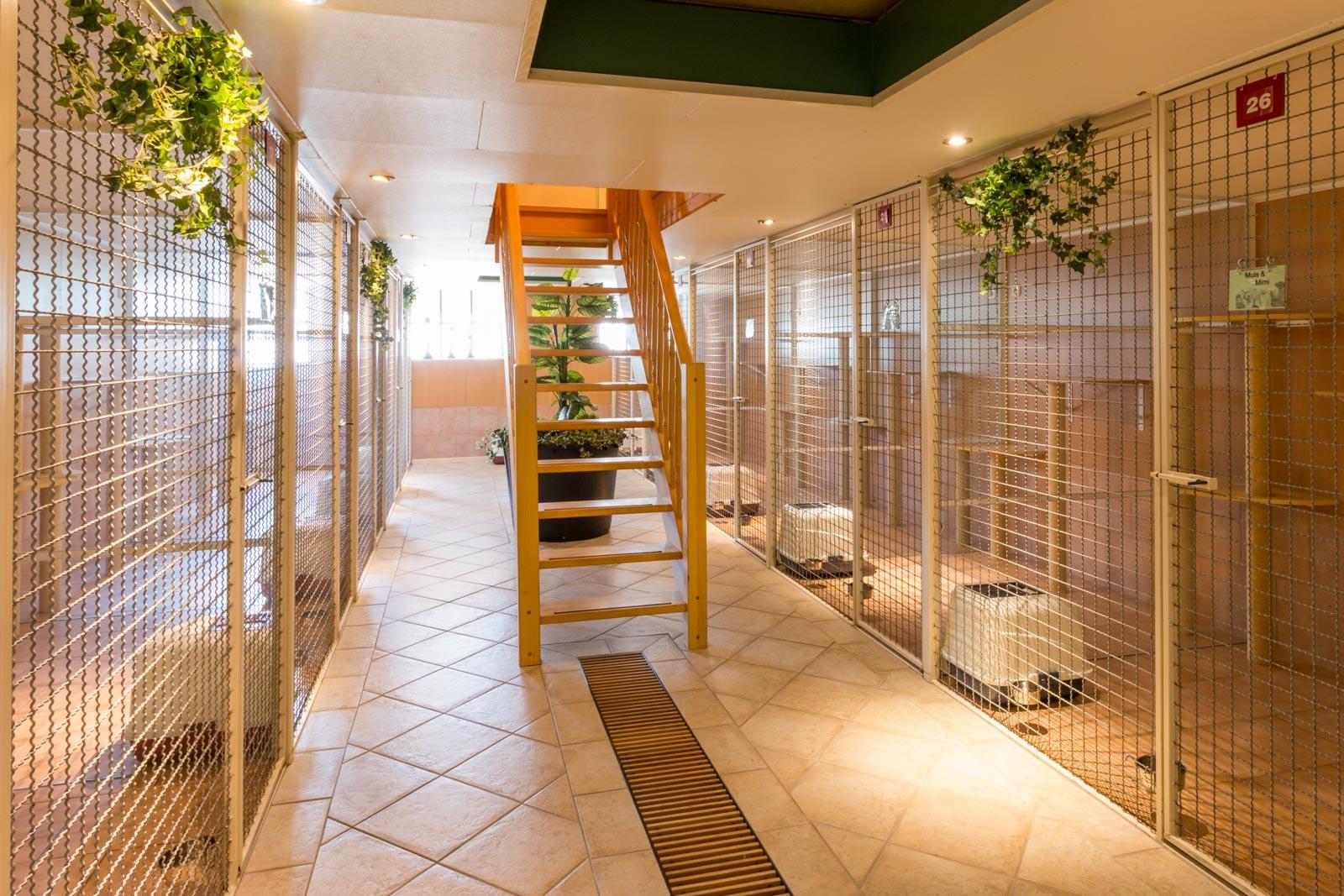 Het interieur van de kattenverblijven