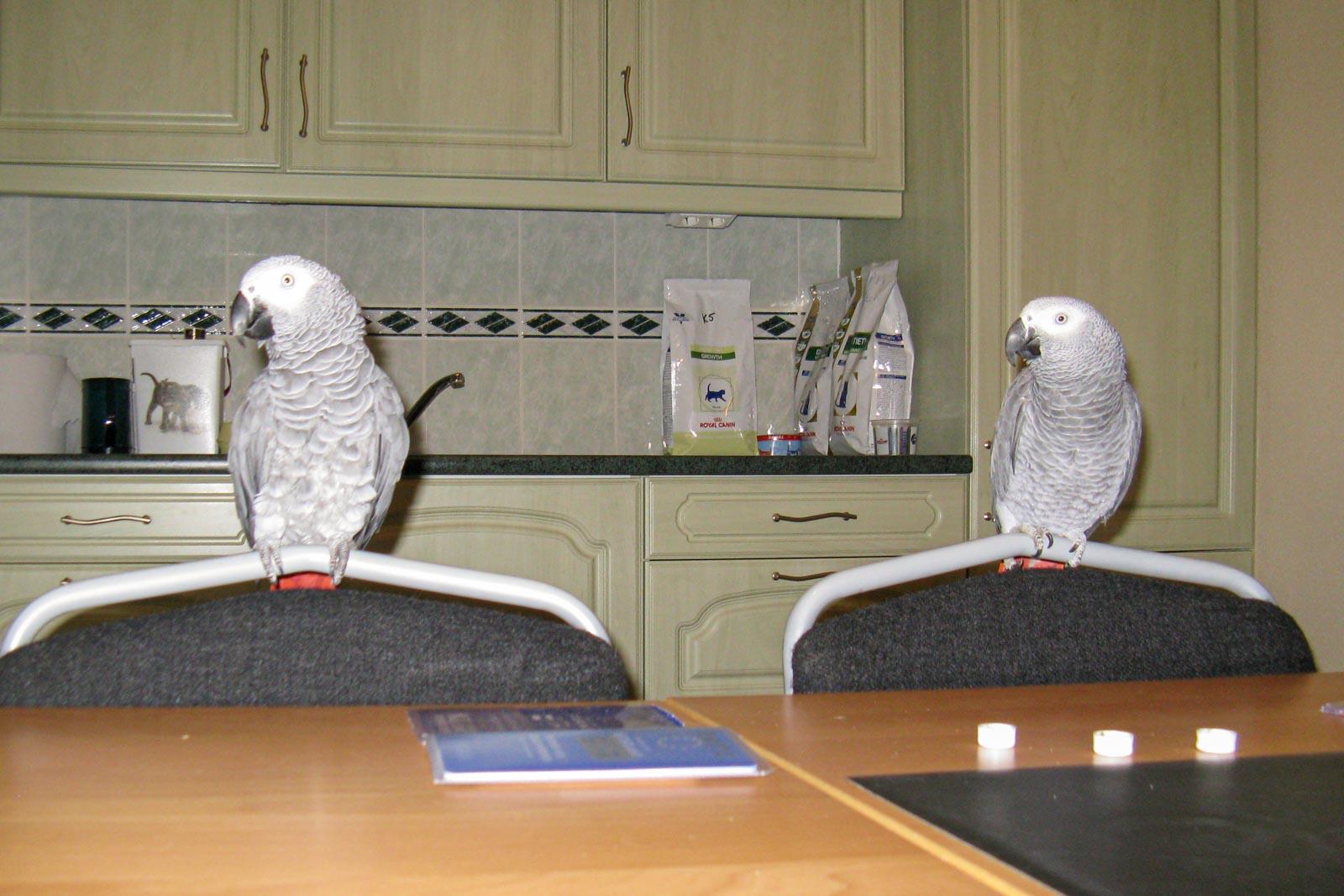 Twee vogels in de ontvangsruimte